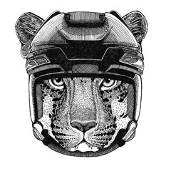 Wild cat Leopard Cat-o'-mountain Panther Hockey image Wild animal wearing hockey helmet Sport animal Winter sport Hockey sport