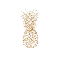Pineapple sketch vector illustration. Pineapple yellow hand drawing.
