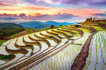 Garden Poster Rice fields Terrace rice field of Ban pa bong piang in Chiangmai, Thailand.