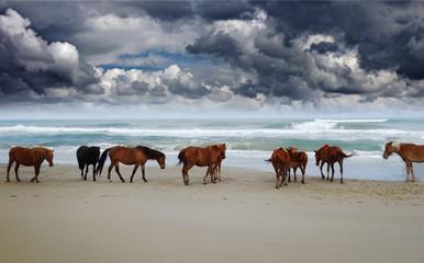 Wild Corolla horses