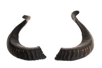 Pair of black ram horns Wall mural
