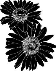 Daisy silhouette drawing in black and white. Bold flower design element. Isolated on white, no background.