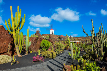 Photo sur Aluminium Iles Canaries Cactus garden in Lanzarote, Canary Islands, Spain
