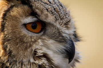 Cropped Image Of Owl