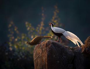 Bird Couple On Rock