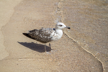 Seagull on the beach in Italy