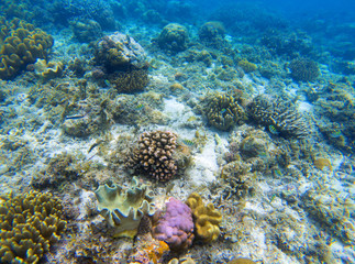 Underwater landscape with young coral reef. Diverse coral ecosystem.