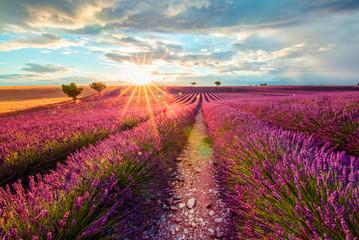 Provence. Lavender Field at sunset, Valensole, France