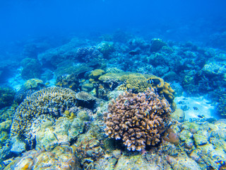 Coral reef undersea landscape. Diverse coral shapes. Coral fish in reef.