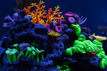 Bright corals under water