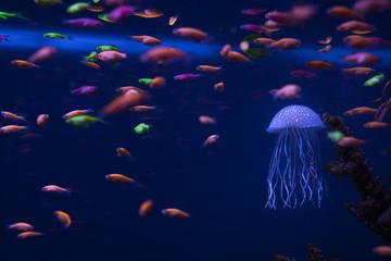 Beautiful jellyfish underwater