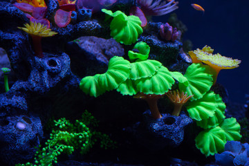 Bright corals on the bottom