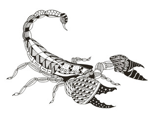 Scorpion zentangle stylized, vector, illustration, freehand pencil, hand drawn, pattern. Print for t-shirts, mobile cover design.