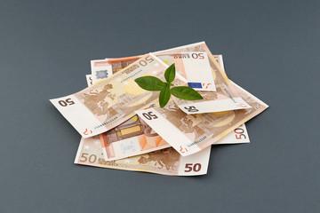 Stapel 50 Euro Geldscheine auf grauem Hintergrund mit Wachstums Symbol Pflanze