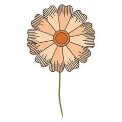 cute and beautiful flower vector illustration design