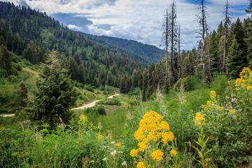 Scott mountain road