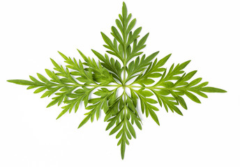 Beautiful fresh green leaf isolate on white background, for banner background, natural concept