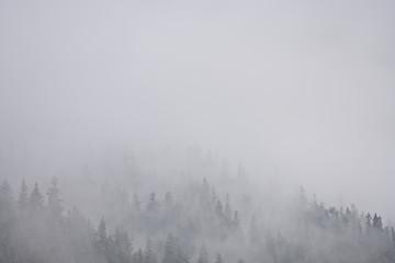 Mist covered coastal rain forest, Kenai Fjords, Alaska