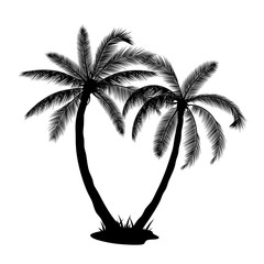 A palm tree silhouettes