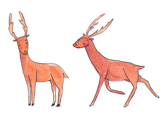 Couple of cute cartoon deer painted in watercolor on clean white background