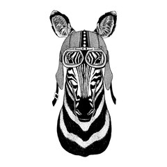 Zebra Horse Motorcycle, biker, aviator, fly club Illustration for tattoo, t-shirt, emblem, badge, logo, patch