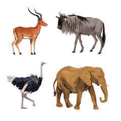 white background with realistic colorful wild african animals