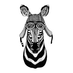 Zebra Horse Wild animal wearing biker motorcycle aviator fly club helmet Illustration for tattoo, emblem, badge, logo, patch