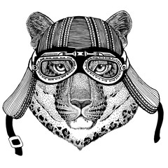 Wild cat Leopard Cat-o'-mountain Panther Wild animal wearing biker motorcycle aviator fly club helmet Illustration for tattoo, emblem, badge, logo, patch