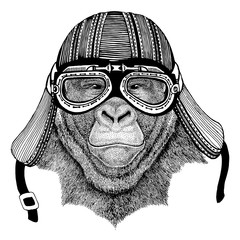 Gorilla, monkey, ape Frightful animal Wild animal wearing biker motorcycle aviator fly club helmet Illustration for tattoo, emblem, badge, logo, patch