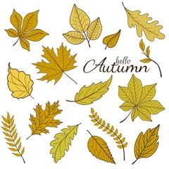 Hello autumn phrase on white background with yellow leaves
