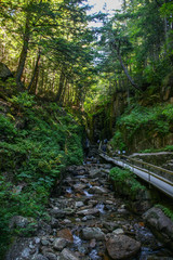Walkway through a forest region in north east USA