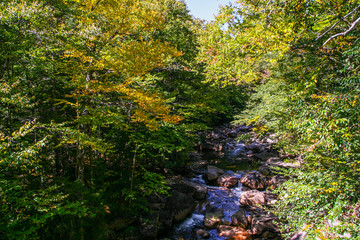 Stream flowing through a forest in fall