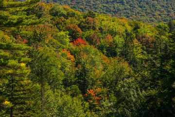 Trees with coloured foliage in New Hampshire in fall