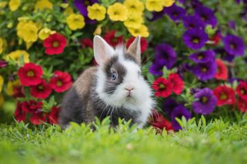 Adorable little rabbit in the garden