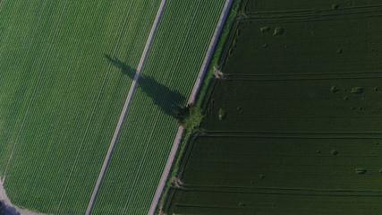 北海道 夏 美瑛の丘 影 太陽 畑 7月 8月 一本の木 モミの木  斜め 自然 豊かな 広大な 直線 緑 農業 野菜 空撮 観光 涼しい 風  木 クリスマスツリー