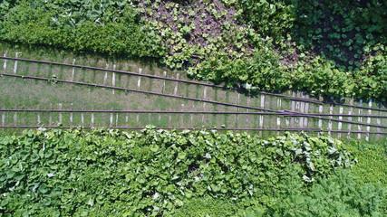 北海道 廃線 夏 7月 8月 線路 駅 使われてない 緑 空撮 二本 わかれ道 ポイント 汽車 列車 ドライブ デート 自然 探検 上士幌町