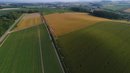 北海道 美瑛の丘 夏 8月 7月 農業 小麦 畑 ドライブ 黄金色 農場 パッチワーク 空撮 農道 大規模農業 緑 空 太陽 めぐみ グルテンフリー 収穫 収穫期 機械化 丘 広大な土地