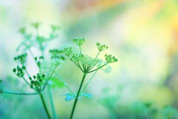 Gentle green flowers