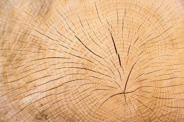 Holz, Baumschnitt Jahresringe als Hintergrund