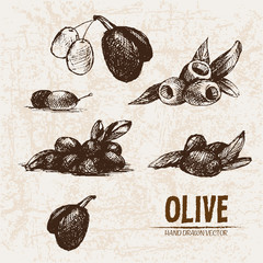 Digital vector detailed line art olive and oil hand drawn retro illustration collection set, stove oven. Thin artistic pencil outline. Vintage ink flat, engraved simple doodle sketches. Isolated