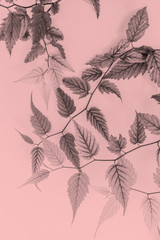 Young leaves, artistic background in soft colors