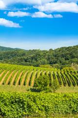 Papiers peints Vignoble Countryside landscape, vineyard in Daruvar region, Croatia