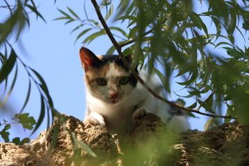 cat, katze, Urlaub