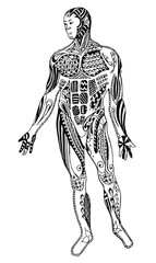 Zentangle muscle man, freehand pencil, vector, illustration, pattern. Zen art.