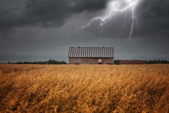 Lightning over Field of Gold