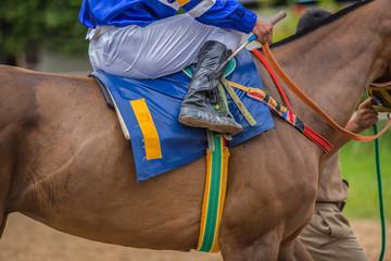 Racehorse.