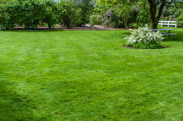 Aluminium Prints Grass Green grass lawn and garden