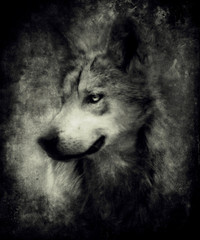 Beautiful close up portrait of mystical wolf. Awesome halloween wallpaper. Design for t-shirt print with wolf.