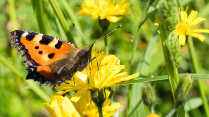 Schmetterling, Andreas Pospisil