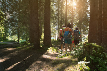 Four man and woman walking along hiking trail path in forest woods during sunny day. Group of friends people summer adventure journey in mountain nature outdoors. Travel exploring Alps, Dolomites